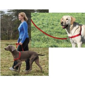 Just $13.00 Perfect for large dogs.